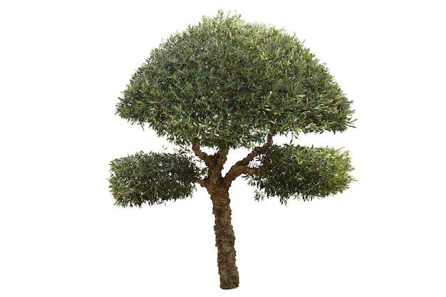 Bellissimo albero a foglie decidue isolato su sfondo bianco