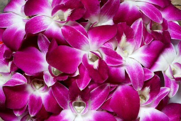 Bellissimo sfondo di fiori di orchidea dendrobium