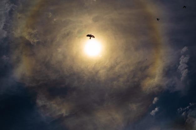 Bella polvere di diamante intorno al sole fenomeni ottici atmosferici silhouette di uccelli contro 22 gradi