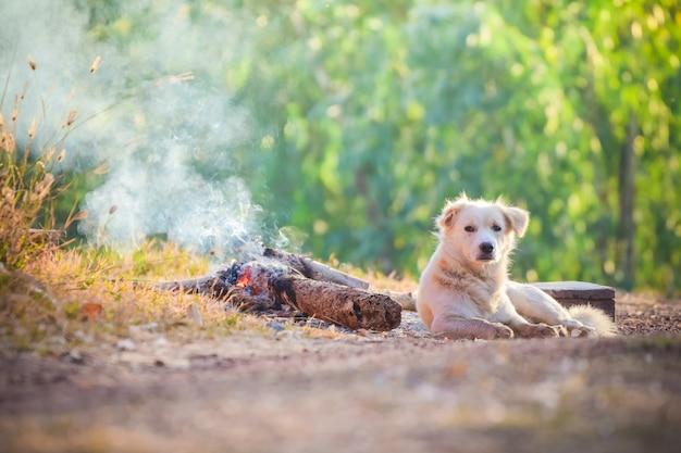 Bello cane che cerca qualcosa sul pavimento con luce solare