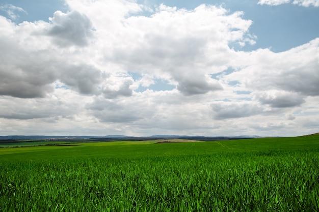 Un bellissimo campo infinito di giovane erba verde che germoglia contro un cielo blu con grandi nuvole bianche