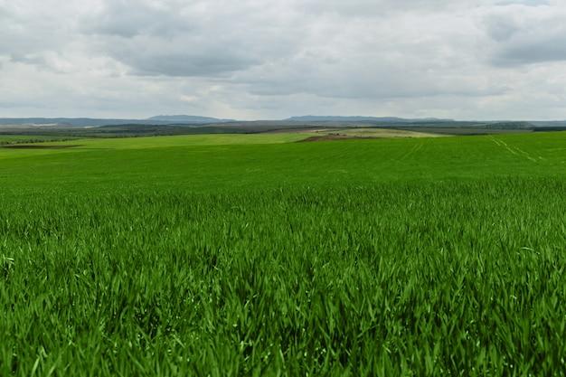 Bellissimo campo infinito di erba verde giovane che germoglia contro il cielo con grandi nuvole