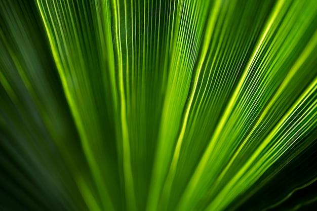 Bellissimo modello esotico di foglie di palma tropicale verde