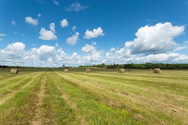 Bellissimi terreni coltivati della regione di pskov, russia.