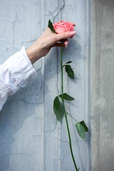 Bella mano femminile che tiene una rosa