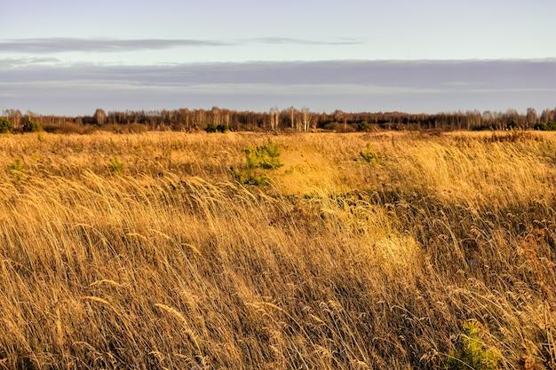 Bellissimo campo in russia in autunno