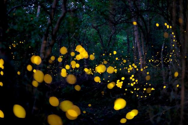 Bello volo della lucciola nella foresta.