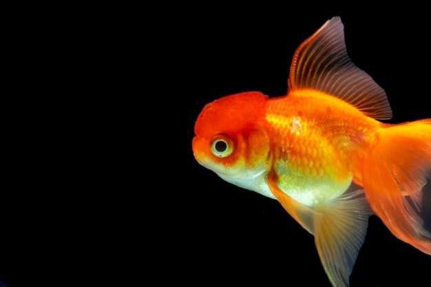 Bellissimo pesce che nuota