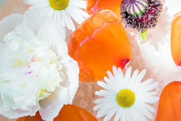 Bellissimo sfondo floreale di papavero, peonia e camomilla