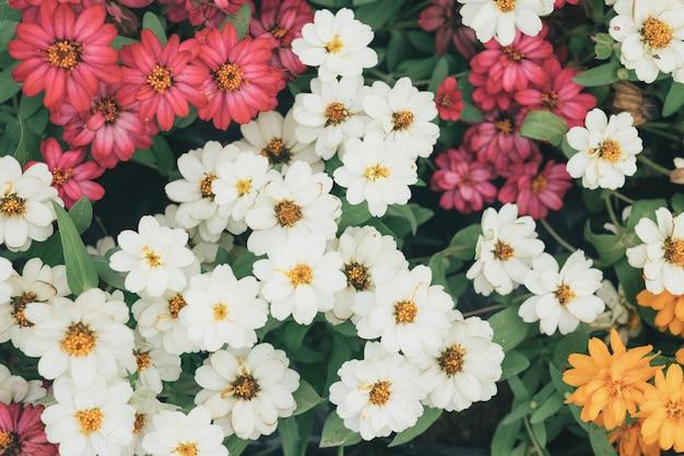 Sfondo di bellissimi fiori