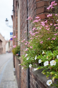 Bellissimi fiori sui balconi di bruges