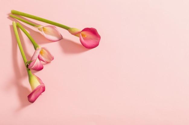 Bellissimi fiori di giglio di calla su sfondo di carta