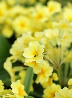 Bellissimi fiori in giardino
