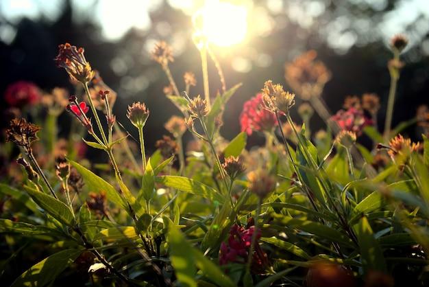 Bellissimi fiori sbocciano le piante cambiamento stagionale concetto di ambiente ecologia primavera estate