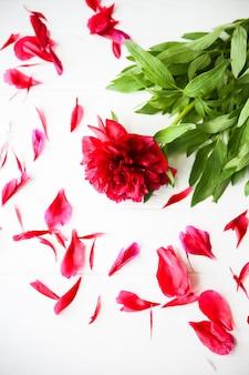Bellissimi fiori su sfondo bianco. mazzo di peonie. perfetto piatto disteso con petali. cartolina per le vacanze madri felici. saluto per la giornata internazionale della donna. idea di compleanno per pubblicità o promozione.