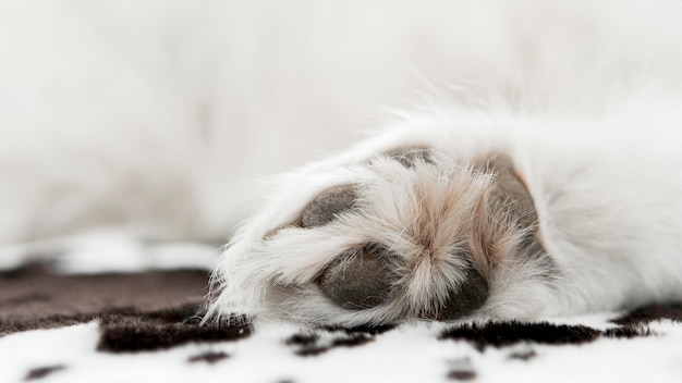 Bellissimo e soffice cane bianco