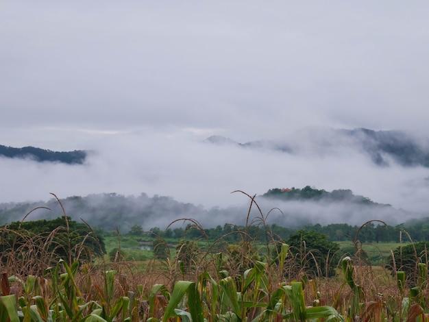 Bellissimo paesaggio di nebbia in montagna