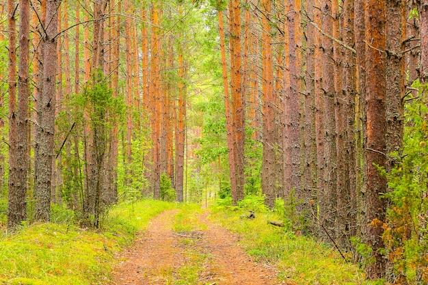 Bellissimo sfondo della foresta la strada si snoda nella foresta verde