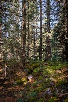 Bellissimo paesaggio forestale sulla soleggiata mattina d'estate