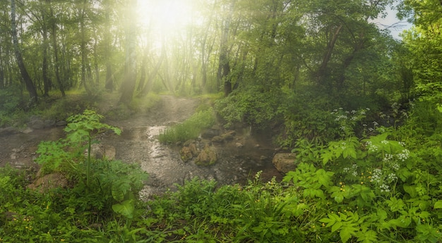 Bella foresta e raggi di sole
