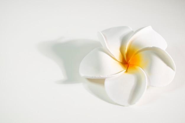 Bellissimo fiore di frangipane acceso con sfondo