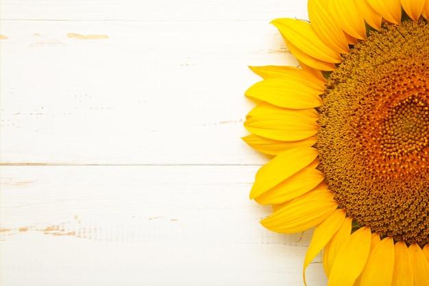 Bellissimo girasole fresco su sfondo bianco. lay piatto, vista dall'alto, copia spazio. autunno o estate concetto, tempo di raccolta, agricoltura. sfondo naturale di girasole.