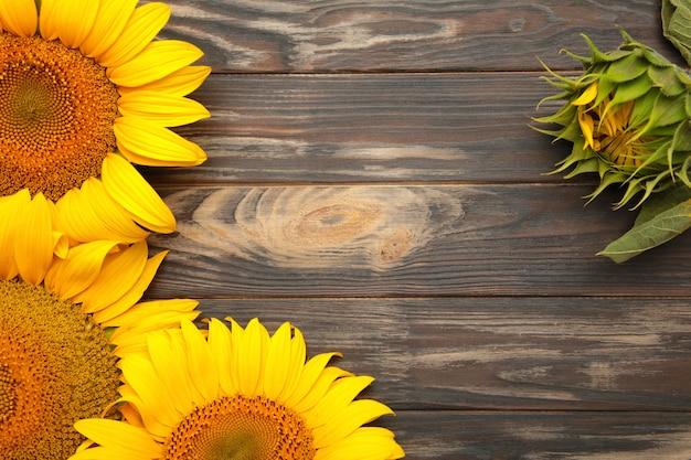 Bellissimi girasoli freschi su sfondo marrone. lay piatto, vista dall'alto, copia spazio. autunno o estate concetto, tempo di raccolta, agricoltura. sfondo naturale di girasole.