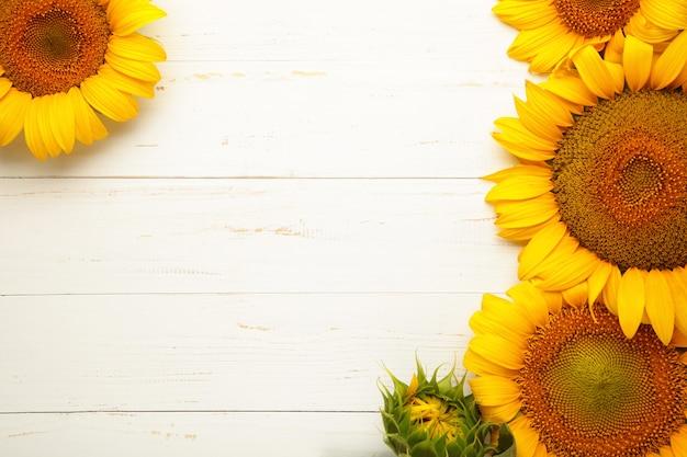 Bellissimi girasoli freschi su sfondo bianco. lay piatto, vista dall'alto, copia spazio. autunno o estate concetto, tempo di raccolta, agricoltura. sfondo naturale di girasole.
