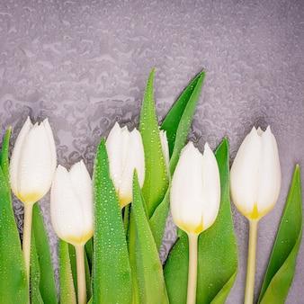 Bellissimi tulipani bianchi freschi con gocce d'acqua