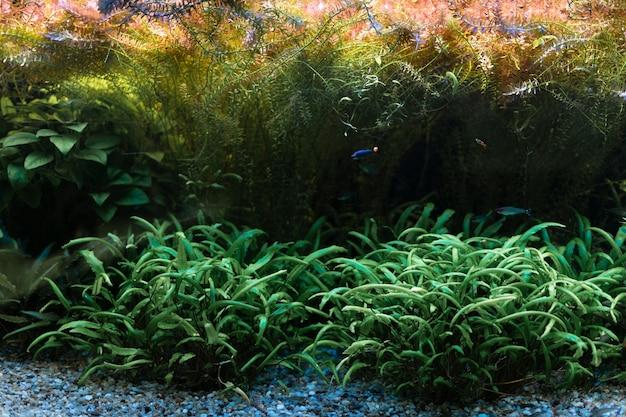 Bellissimo acquario d'acqua dolce con piante verdi e molti pesci acquario d'acqua dolce con un grande gregge...