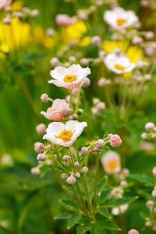 Bellissimo giardino di fiori su uno sfondo di erba verde.