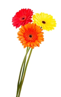 Bellissimi fiori di gerbera isolati su bianco. sfondo di bouquet di fiori