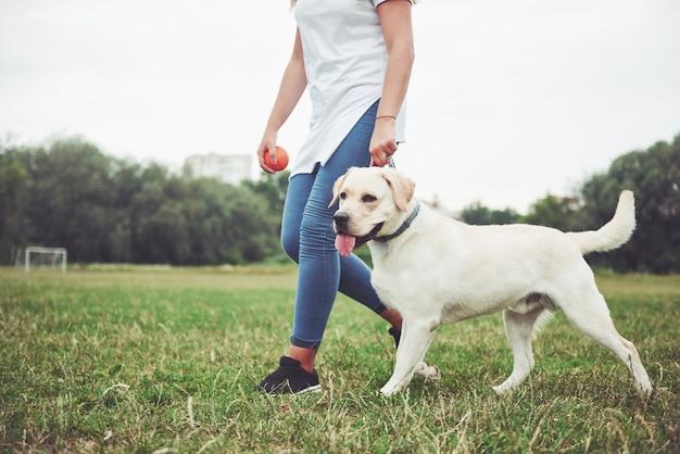 Bella ragazza con un bel cane in un parco sull'erba verde.