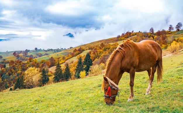 Un bellissimo stallone aggraziato cammina lungo un campo verde e mangia erba fresca succosa sullo sfondo della splendida natura dei carpazi