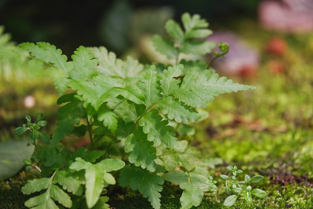Un bellissimo sfondo di felce adiantum verde