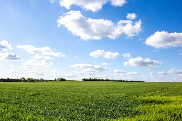 Bellissimo campo verde con paesaggio di nuvole contrastanti