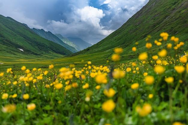Bellissimi prati alpini fioriti verdi sul cornicione bzerpinsky nelle montagne krasnaya polyana