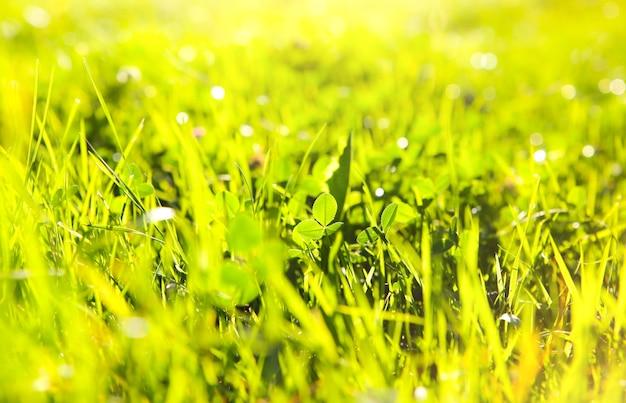 Bella erba verde. vibrazioni estive. stagione primaverile. luci del sole nelle piante. la bellezza della natura.