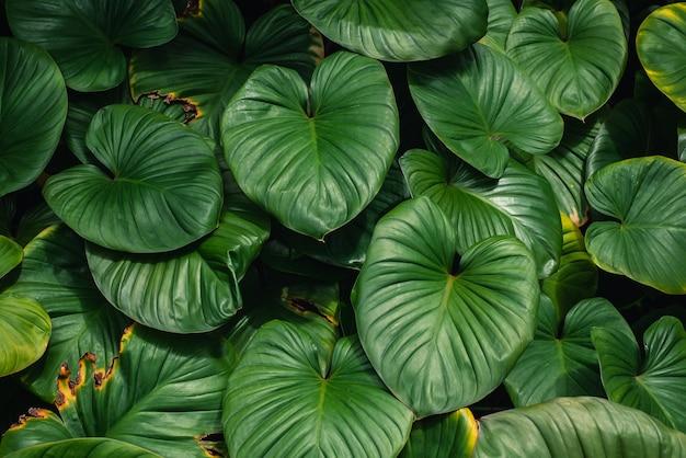 Bella di sfondo verde foglia
