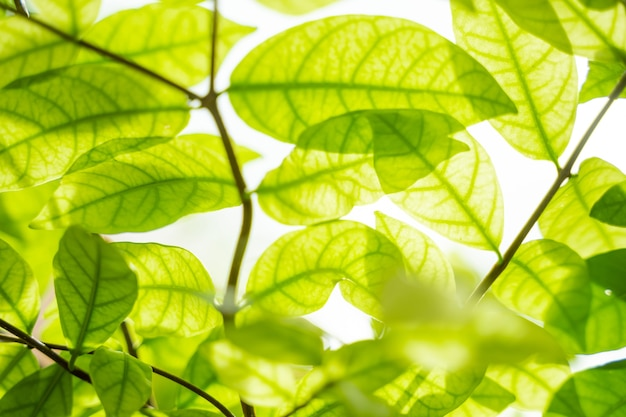 Belle foglie verdi con la luce del sole. sfondo verde naturale con messa a fuoco selettiva.