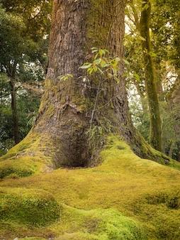 Bellissimo muschio verde che copre le radici di un grande albero