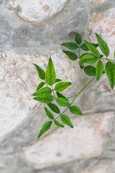 Bella pianta verde sulla pietra