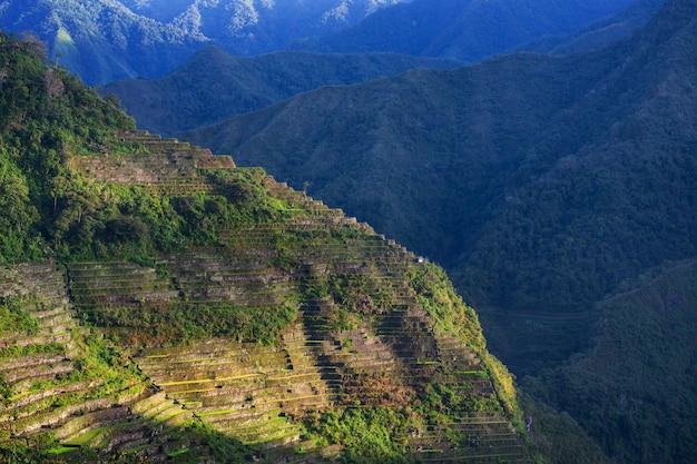Belle terrazze di riso verde nelle filippine. coltivazione del riso nell'isola di luzon.