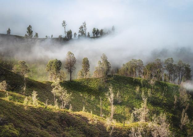 Bellissimi alberi verdi sulla montagna con nebbia all'alba del mattino.