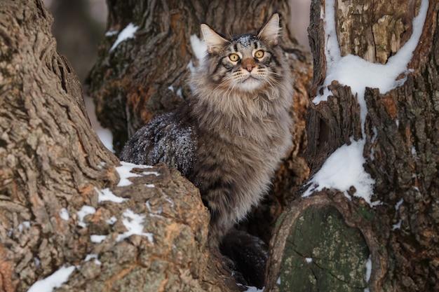 Bella passeggiata gtey del gatto nella foresta in inverno