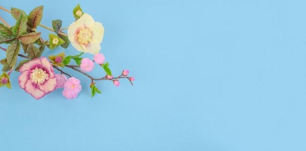Bellissimi fiori di elleboro e sakura su sfondo blu, con spazio di copia