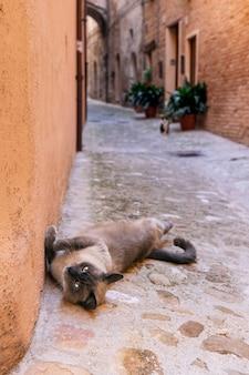 Bellissimo gatto senzatetto su una strada stretta in una città italiana.