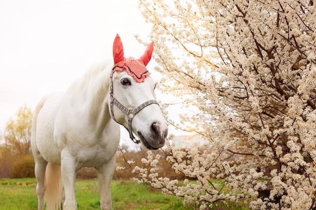 Il bellissimo cavallo con un cappello decorativo mangia l'erba su un prato