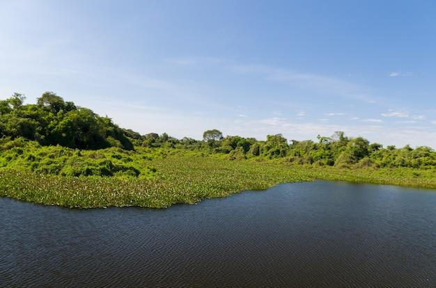 Bella immagine della zona umida brasiliana