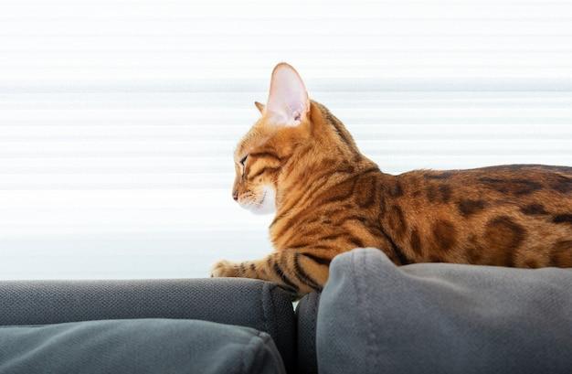 Un bel gattino sta riposando sul retro del divano vicino alla finestra. vista laterale